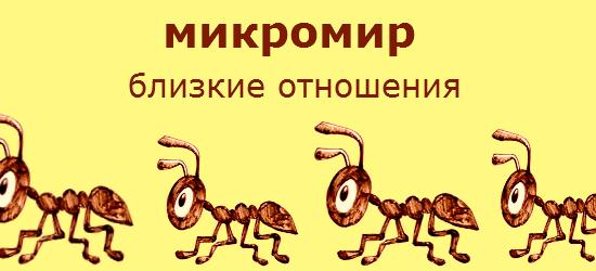 """Смотреть документальный видео фильм онлайн """"Жизнь в микромире. Близкие отношения. Серия 4"""". В этом саду водится насекомое, которое ненавидят все садовники, это растительная тля. Для садовников он враг, но в зарослях живут ее друзья, муравьи. Они пасут тлю, выбирая лучшие участки подобно тому, как пастухи сгоняют овец на пастбища, где трава гуще. Пастухи защищают свои стада от волков, а муравьи защищают тлю от хищных насекомых. Самые опасные из них, божьи коровки, они поедают тлю и муравьи пытаются прогнать божью коровку. Трудно, почти невозможно прокусить ее скользкий панцирь, но муравьи добились успеха. Тля выделяет медвяную росу, любимое лакомство муравьев, поэтому те защищают ее. Такие близкие отношения не редки среди насекомых, возможно потому что у них было много времени чтобы определиться. Насекомые появились на суше примерно на 100 миллионов лет раньше чем позвоночные, к тому же они быстрее развиваются, в течении года может смениться несколько поколений насекомых и неудивительно что иногда между ними устанавливаются отношения настолько сложные, что их трудно бывает описать. Эти сообщества распространены не только среди насекомых, но и среди растений. Они сформировались в раннюю эпоху. Растение основа жизни, лишь они могут сочетать минералы взятые с земли с газами из воздуха и образовывать нечто пригодное для пищи. Однако, насекомые не только поедают растения, они используют их более изощренными способами. Тропические влажные джунгли, известны обилием и густотой растительности, но в этом перуанском лесу, есть загадочные поляны, где растут деревья, одного или двух видов. Местные жители называют такие участки """"садами дьявола"""" и считают что духи убивают другие деревья. Кто же настоящие убийцы? Их обнаружили совсем недавно, у выживших деревьев на черешках всех листьев, есть такие вздутия, в них снаружи, внутрь и назад, путешествую целые армии этих крошечных муравьев, вида Мирмилахиста Шумани. Эти вздутия образованные деревом, служат домом для муравьев, здесь они о"""